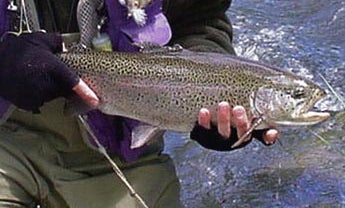 How to Catch More Trout