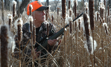 Hunting Whitetail Deer in The Weeds