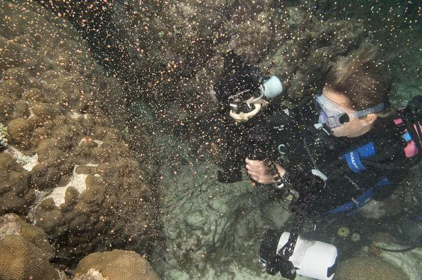 Florida Keys Coral Spawing is an Annual Phenomenon