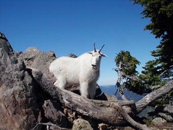 httpswww.outdoorlife.comsitesoutdoorlife.comfilesimport2014importImage2008legacyexposures_28.jpg