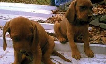 Coonhound Self-Help