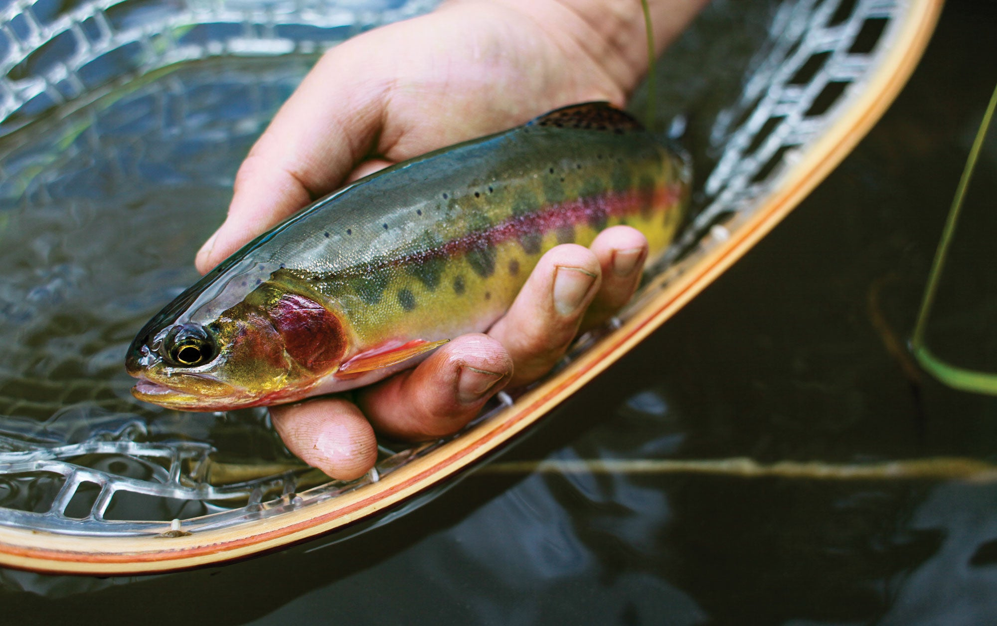 Fishing Adventure: Chasing Backcountry Golden Trout