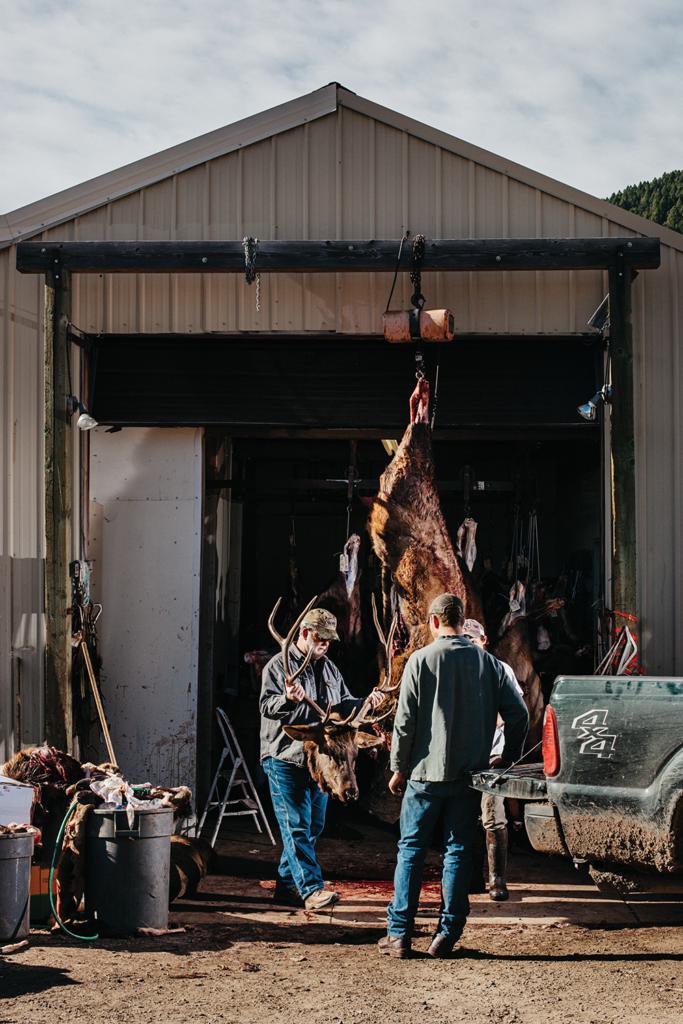 unloading elk meat