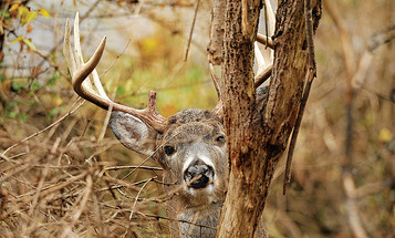 How to Create a Sanctuary to Draw and Hold Older Bucks