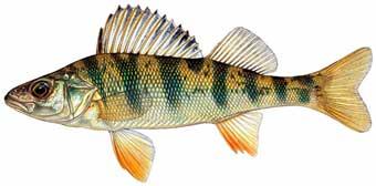 httpswww.outdoorlife.comsitesoutdoorlife.comfilesimport2014importImage2007legacyoutdoorgalleryspawnfish_may073_168.jpg
