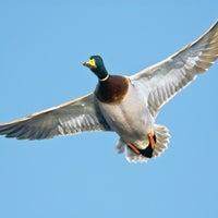 Early Season Waterfowl Secrets