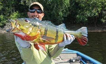 Amazon Fishing: Catching Peacock Bass on the Rio Negro