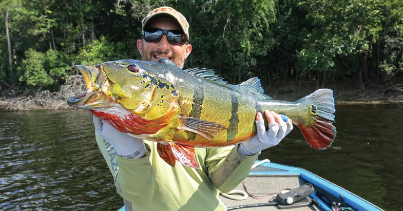 peacock bass, rio negro, amazon dogfish, freshwater barracuda, extreme angling, angling adventure, amazon fishing