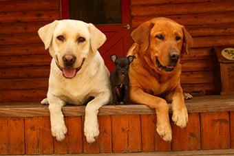 httpswww.outdoorlife.comsitesoutdoorlife.comfilesimport2014importImage2007legacyoutdoorgallerykezarKezar_Portfolio_14.jpg