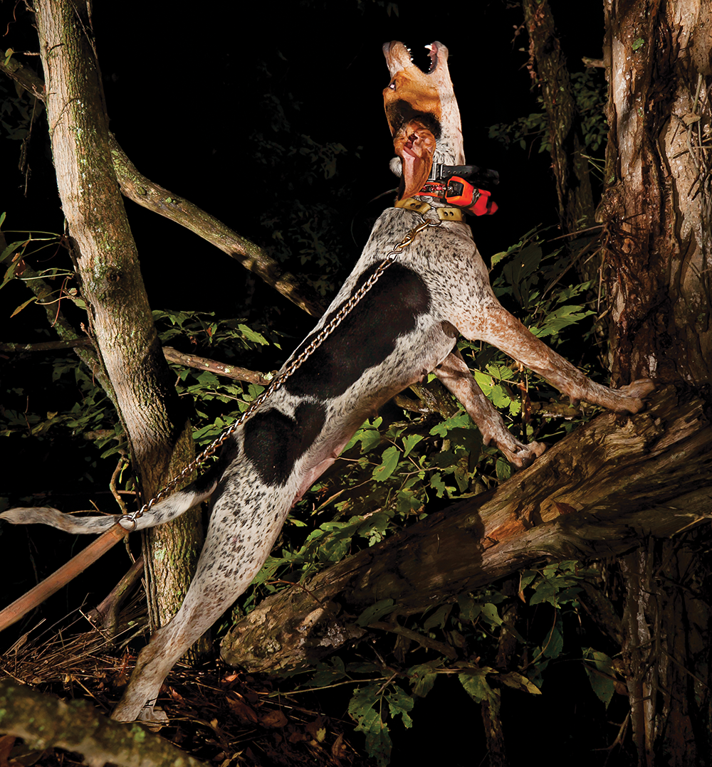 Nothing But a Hound Dog: A Photo Essay Celebrating Man's Best Hunting Partner