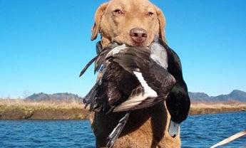 Columbia Duck Hot Spots