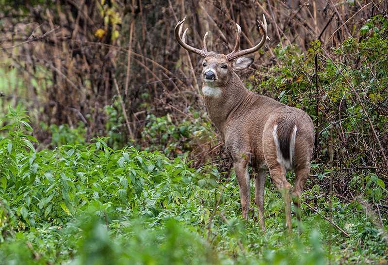 The Hunger Game: Hunting Late-Season Whitetails in the South