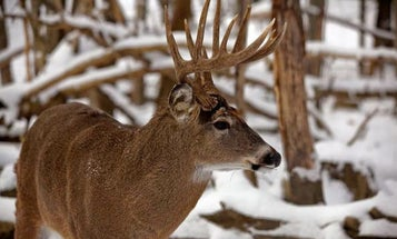 Outdoor Life's 2014 National Whitetail Survey