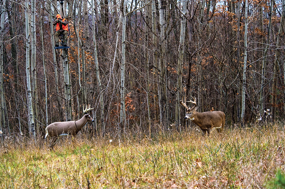 A hunter in a treestand overlooking a field with a buck decoy and a whitetail buck.
