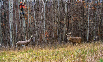 6 Early-Season Setups: Where and When to Hunt a Stand, and When to Relocate