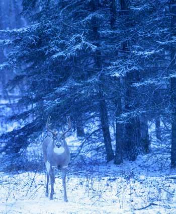 httpswww.outdoorlife.comsitesoutdoorlife.comfilesimport2014importImage2007legacyoutdoorimagescanada06_425.jpg
