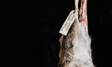 How to Be a Better Big-Game Butcher