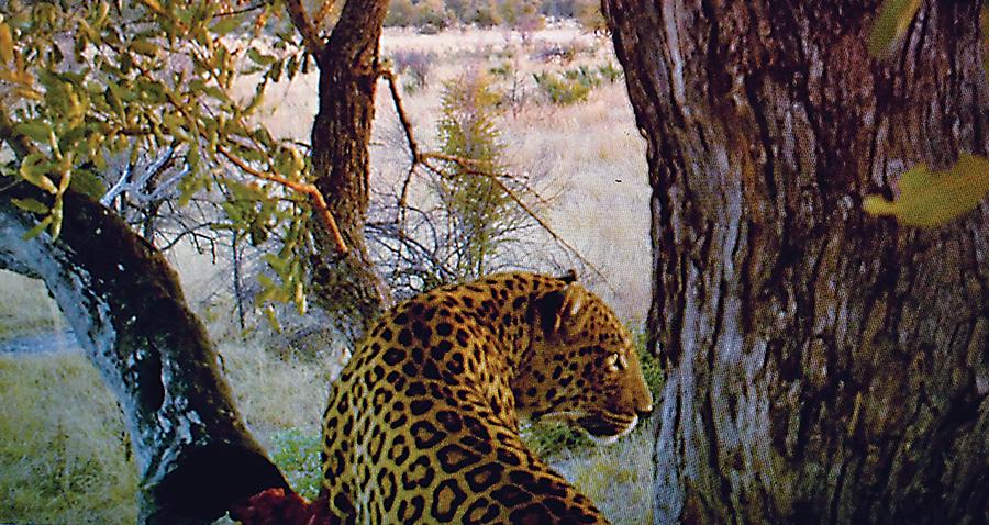 httpswww.outdoorlife.comsitesoutdoorlife.comfilesimport2015AfricaTrailCam.png