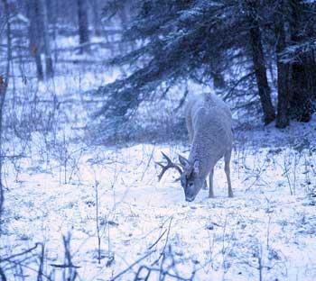 httpswww.outdoorlife.comsitesoutdoorlife.comfilesimport2014importImage2007legacyoutdoorimagescanada09_312.jpg