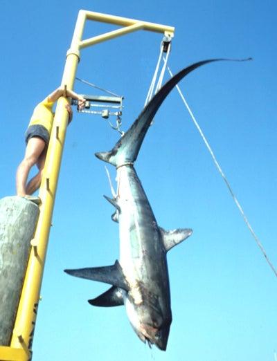 httpswww.outdoorlife.comsitesoutdoorlife.comfilesimport2014importImage2008legacyoutdoorlifefinal_shark5.jpg