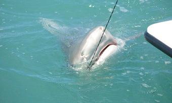 Fishing Shark Alley: Boca Grande Pass