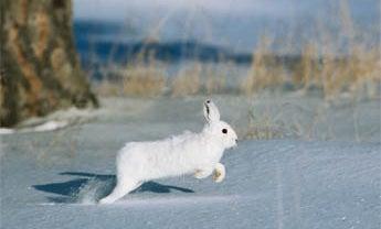 Mid-Winter Humility