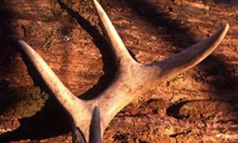 Mike Hanback's Big Buck Zone