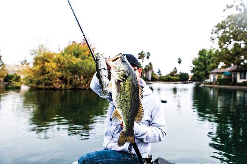 httpswww.outdoorlife.comsitesoutdoorlife.comfilesimport2014Urban-Fish-Bass.png