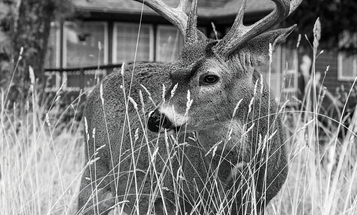 10 Things You Should Learn from the Deer in Your Backyard