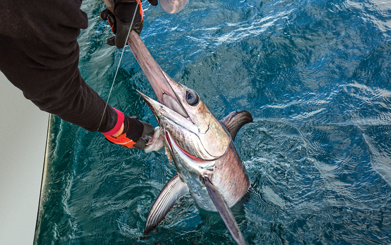 louisiana swordfish, lousiana daytime swordfish, fishing pioneer, Gulf of Mexico swordfish, deep-sea fishing, deepwater swordfish, Mississippi River Canyon