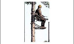 Stuck Up a Tree — February 2002