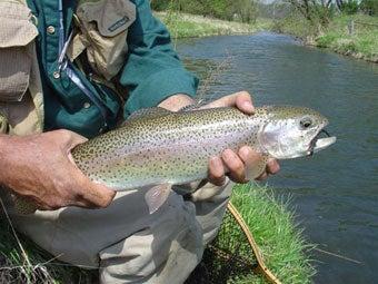 httpswww.outdoorlife.comsitesoutdoorlife.comfilesimport2014importImage2007legacyoutdoorlife140-37TroutRainbow.jpg