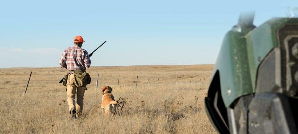 golden retriever, hunting dogs