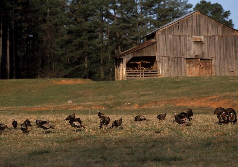 """flock"