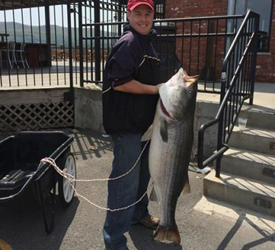 Giant Striped Bass Sets New York Record
