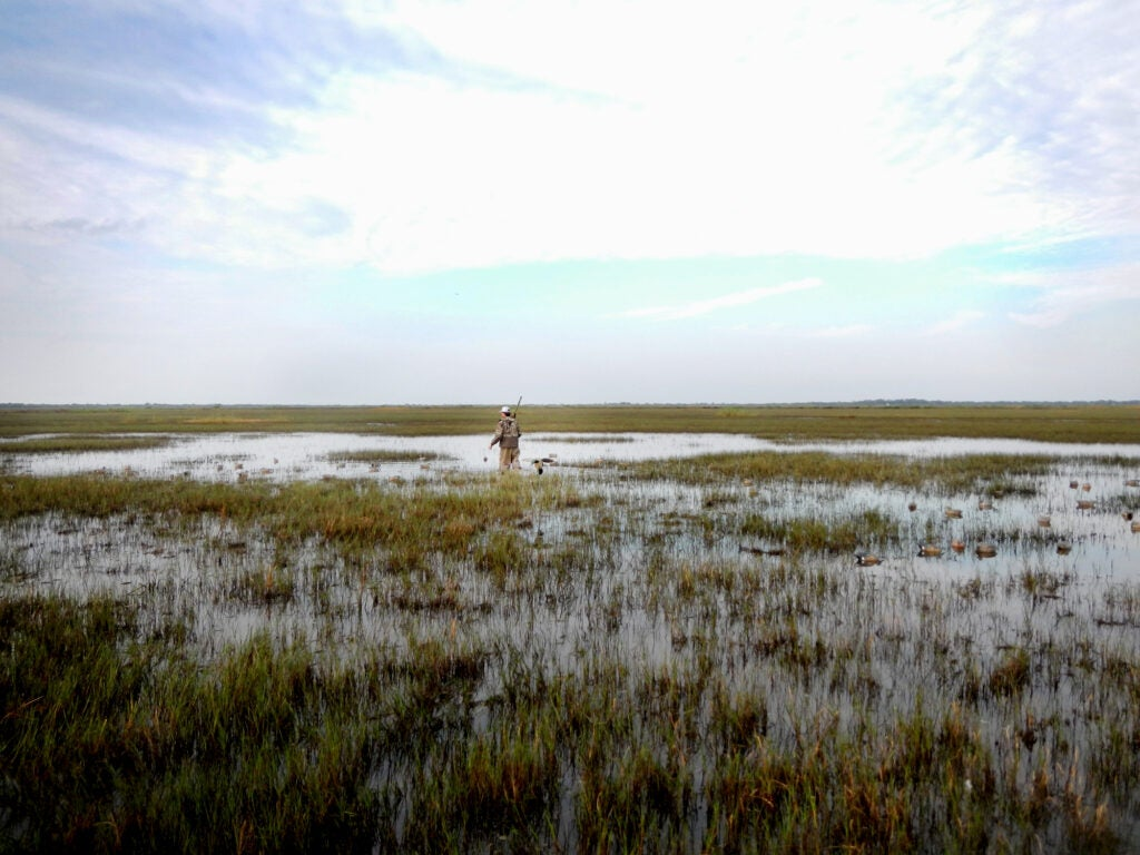 duck hunter wild cow island texas