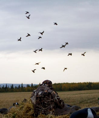 Waterfowl Hot Spot: Hunting Ducks and Geese in Central British Columbia