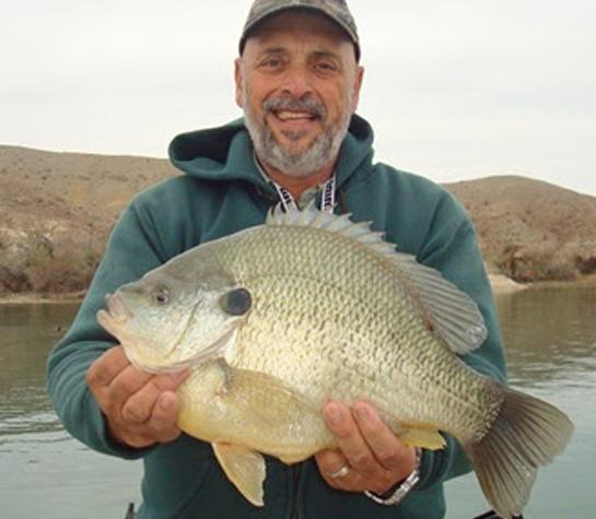 Pending World-Record Redear Sunfish Plucked from Lake Havasu