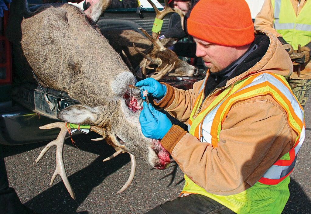 CWD in deer