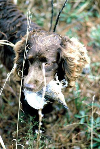 httpswww.outdoorlife.comsitesoutdoorlife.comfilesimport2014importImage2009photo730._Virginia.jpg