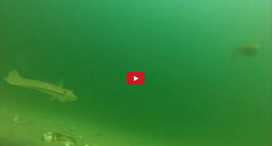 Video: Secrets Behind a Flounder Bite