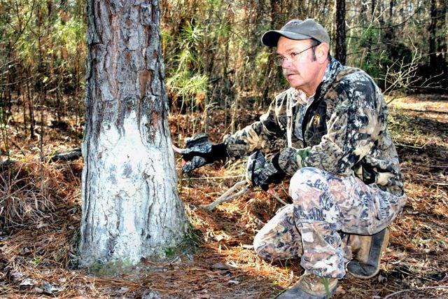httpswww.outdoorlife.comsitesoutdoorlife.comfilesimport2014importImage2008legacyoutdoorlife100-hogs_rubbed.jpg
