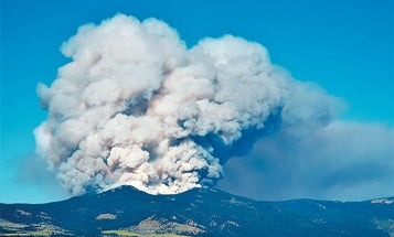 How to Hunt Old Forest Fire Burns for Big Bucks