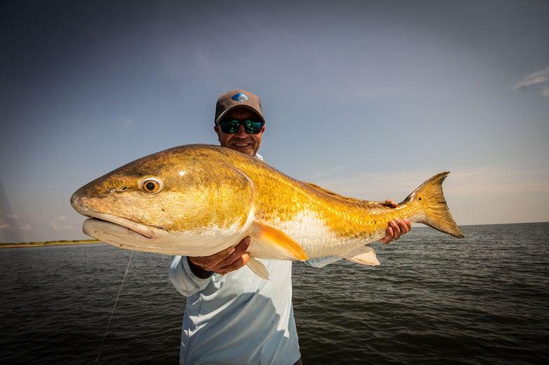 A bull redfish from Louisiana