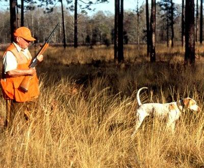 httpswww.outdoorlife.comsitesoutdoorlife.comfilesimport2014importImage2008legacyoutdoorlifedog_Pointer.jpg
