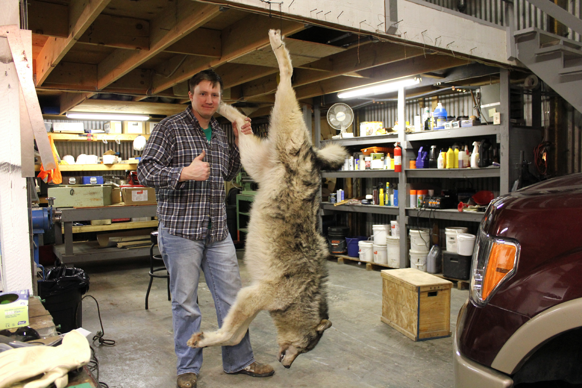 How to Properly Care for and Skin a Wolf Hide
