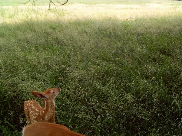 httpswww.outdoorlife.comsitesoutdoorlife.comfilesimport2013images201007RQ17_0.jpg