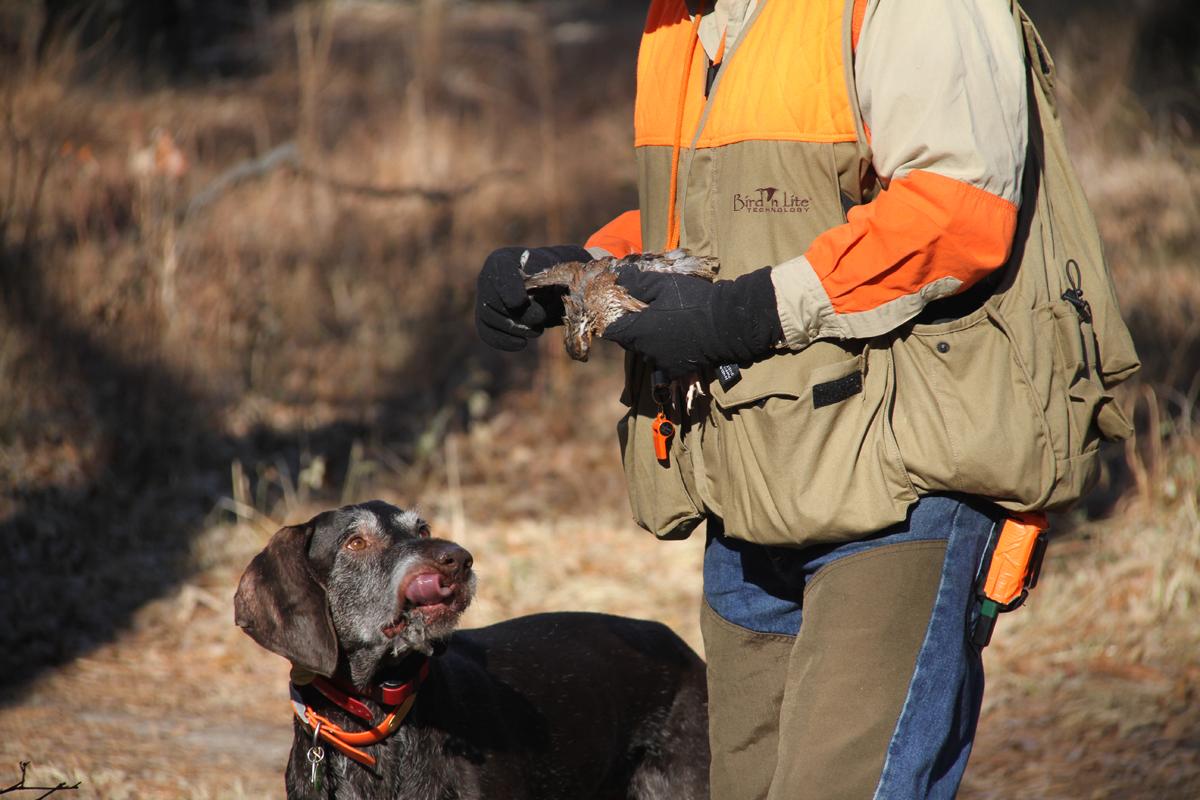 bird dog and a quail