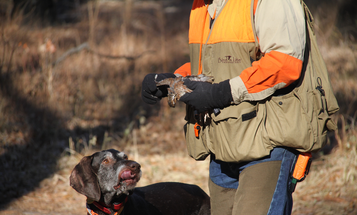 Why You Should Always Be Honest with Your Bird Dog