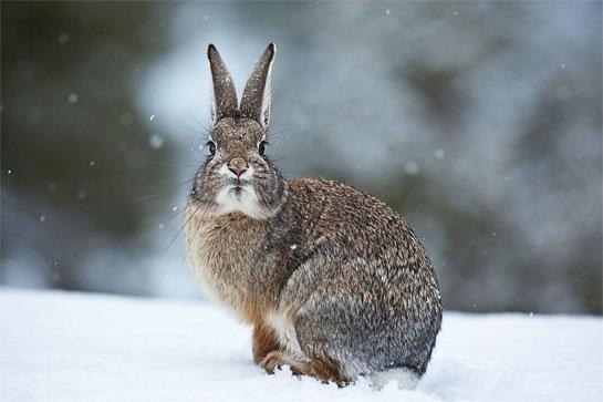 Hunting Rabbits is the Perfect Cure for Winter Cabin Fever